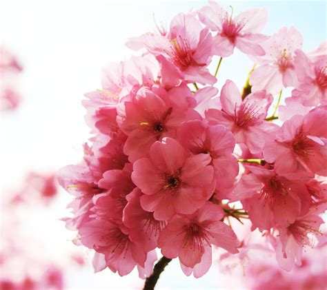 L 876 Beautifull Flower Kimono 1 배경 배경화면 맛클