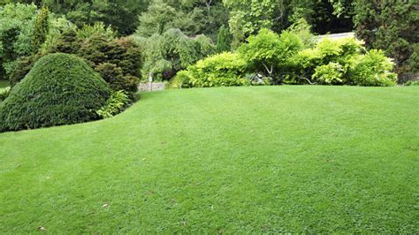 lawn care lawn care vancouver guide and important information for