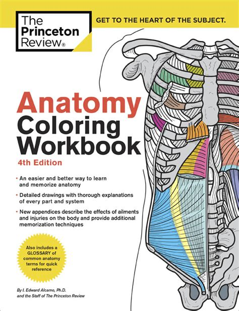 anatomy and physiology coloring workbook chapter 13 journey anatomy coloring book princeton review 3ed 005102