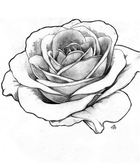 rose tattoo drawings drawing outline roses portfolio