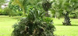 Limbe Botanic Garden Limbe Botanic Garden Cameroon Walking Tours Limbe Hiking Limbe Paths Paths Limbe Paths