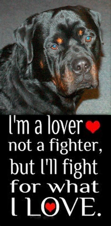 why does my rottweiler sit on me 25 beste idee 235 n rottweiler quotes op huisdier citaten labrador