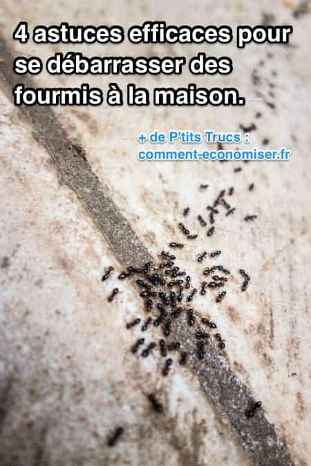 fourmis dans la maison 4 astuces efficaces pour se d 233 barrasser des fourmis 224 la