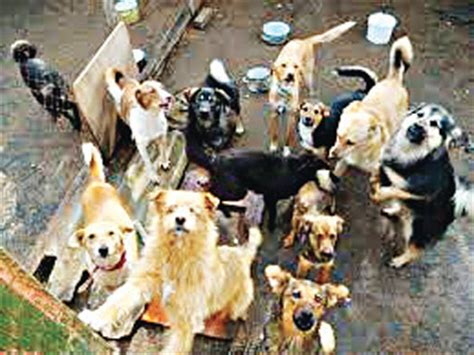 how many do dogs how many dogs do you 2 features the guardian nigeria newspaper