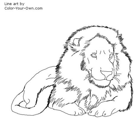 male lion coloring pages male lion colouring pages