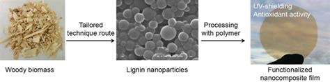 Lignin Valorization Lignin Nanoparticles As High Value