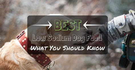 low sodium dogs the best low sodium food what you should thinkofpuppy
