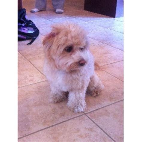 tlc puppy tlc pet personal service burlington ontario l7l 7n3
