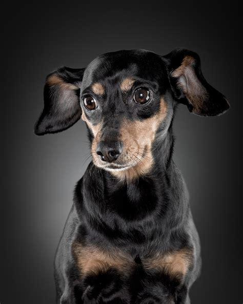 puppy portraits 25 inspirational portrait photographs