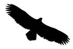 condor vector silhouette royalty free condor vector silhouette royalty free stock photos image
