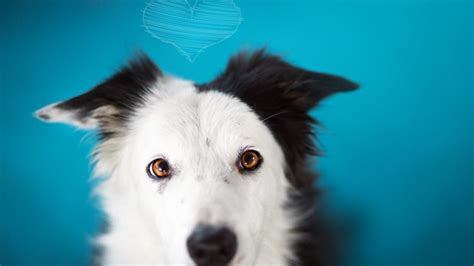 black and white dog wallpaper black and white dog hd wallpaper wallpaperfx