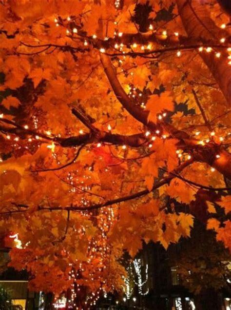trees with orange lights imagine something blue supernatural amino