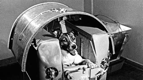 remembering laika space dog  soviet hero   yorker