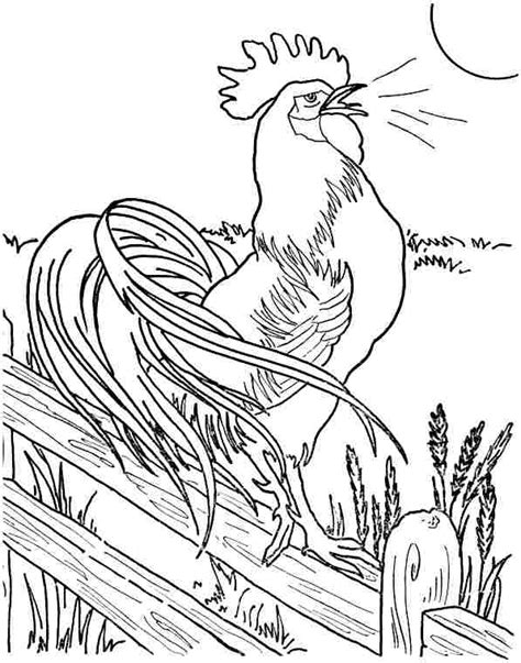 rooster coloring page big rooster pictures az coloring pages sketch coloring page