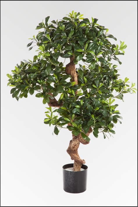 k nstliche zimmerpflanzen wir bieten ihnen eine gro 223 e auswahl an k 252 nstlichen