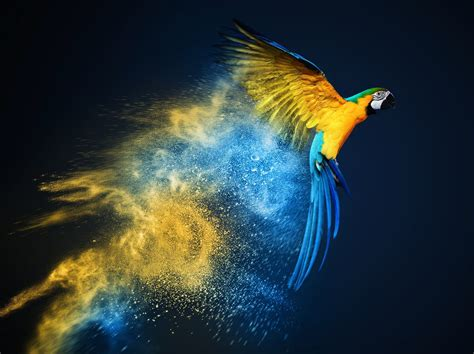 color photo blue and yellow macaw wallpapers backgrounds