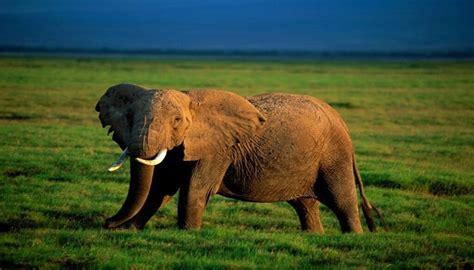 imagenes de animales naturales paisajes naturales con animales imagenes de paisajes