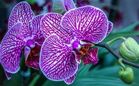 fiori tropicali nomi scarica sfondi orchidee fiori tropicali rosa orchidea
