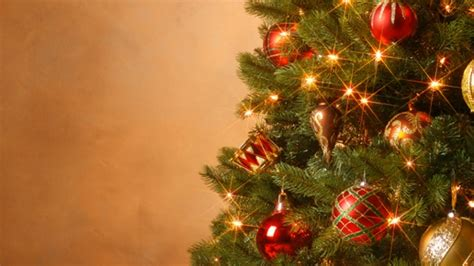 christmas tree growers push back at allergy claims new