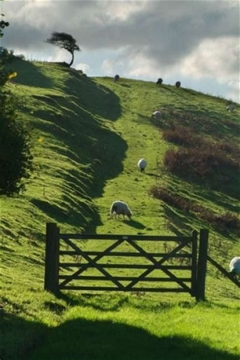Nelieda Green green pastures country sheep green foods and green
