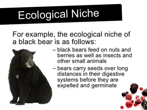 exle of niche ecological niche exle 38667 notefolio