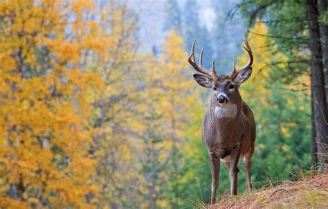 Bucks With by Buck Education Outdoors