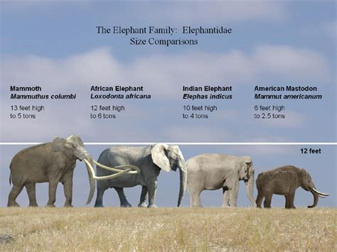 Prehistoric Elephants Size