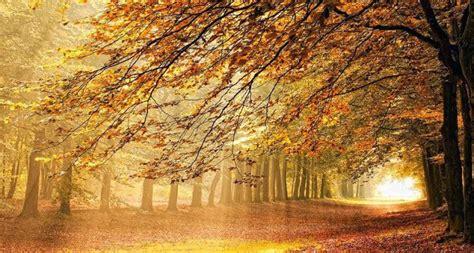quando i poeti parlano di quelli parlano agli alberi leaf peeping sbirciando