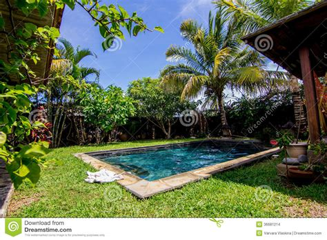 palm tree backyard swimming pool and palm trees in the backyard stock photo