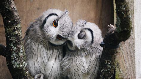 owl lover owl love by dann e on deviantart