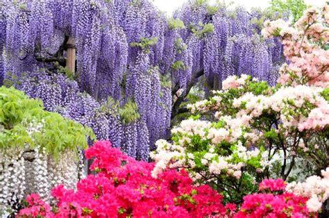 kawachi fuji gardens kawachi fuji garden japan pinterest