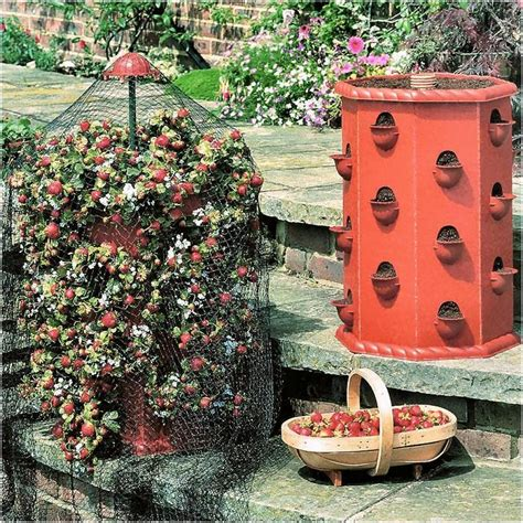 Strawberry Tower Planter by Strawberry Tower Harrod Horticultural Uk