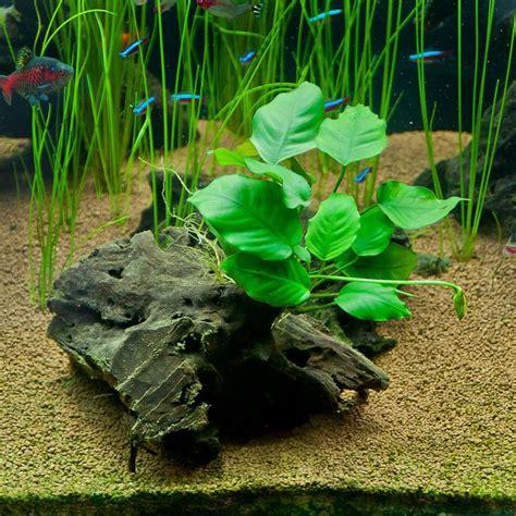 what kind of light for aquarium plants 17 best images about aquarium setups on pinterest