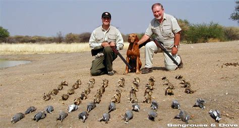 how to a to bird hunt wingshooting namibia