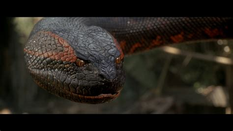 film giant snake 4 anaconda hd wallpapers backgrounds wallpaper abyss