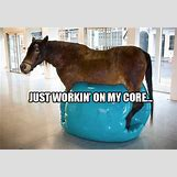 Funny Animal Workout Meme   620 x 426 jpeg 159kB