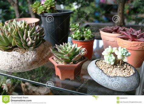 cute plant cute cactus plants stock photo image of adorable pots