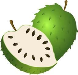 gambar vektor gratis guanabana sirsak buah eksotis gambar gratis di pixabay 155351