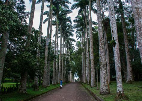 aburi botanical garden aburi botanical garden encompassed a journey through the