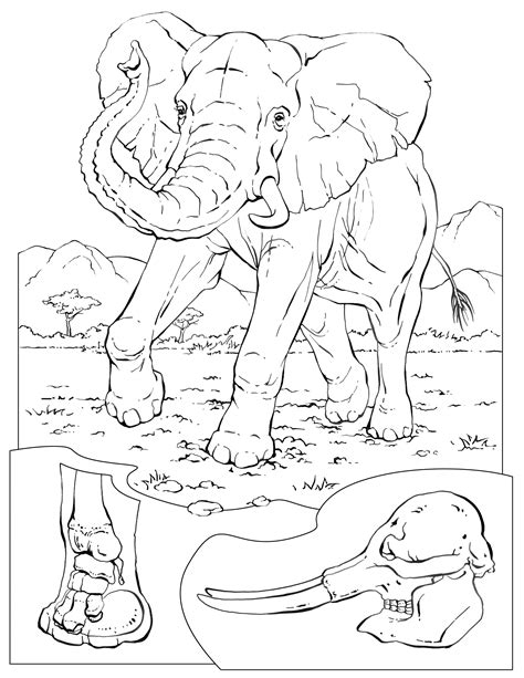 coloring book pages elephant free coloring pages of elephant