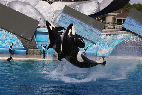 Orcas In Captivity Essay by May 2014 My E Portfolio