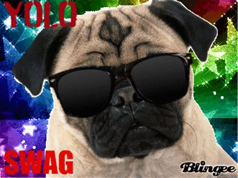 pug rate swag pug picture 131629892 blingee