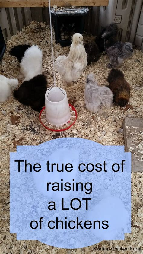 Backyard Chickens Cost Murano Chicken Farm How Much Does It Cost To Raise Chickens