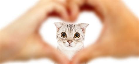 How to Make Your Cat Love You: The Ultimate Guide