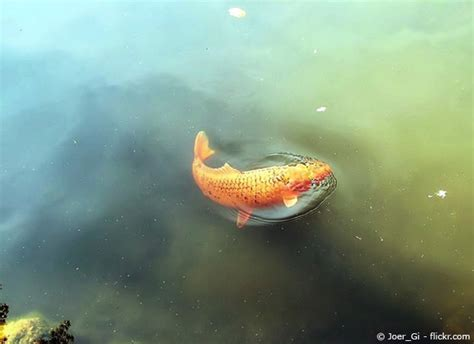 wann beißen welche fische welche fische f 252 r den gartenteich garten hausxxl
