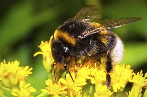 kill bees  sevin dust hunker