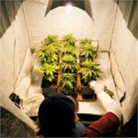 cannabis room temperature proper level of humidity and temperature in an indoor marijuana grow room