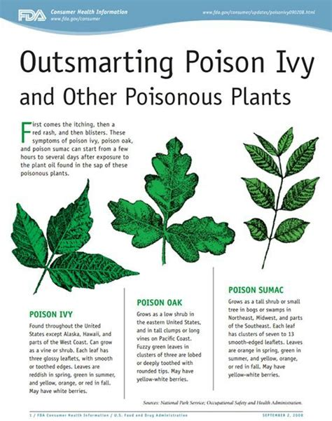 poison ivy oak and sumac information center www 27 best images about important information on pinterest