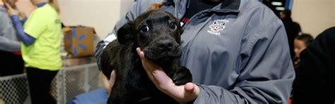 adopt a puppy chicago adopt a program chicago wolves