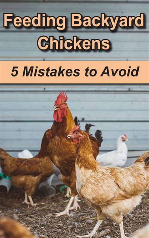 What To Feed Backyard Chickens Feeding Backyard Chickens 5 Common Mistakes To Avoid
